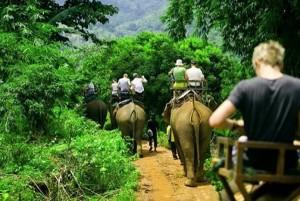 elephant-trekking-1