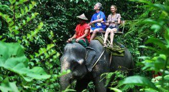 elephant-trekking-khao-sok