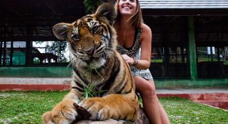 semplice-tiger-kingdom-phuket-9