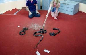 phuket-snake-show-8