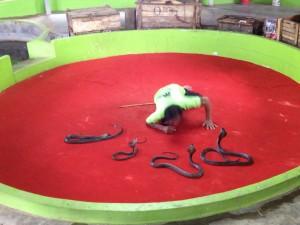 snake-performer