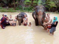 Nopparat Elephant Sanctuary